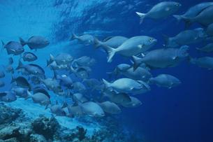 魚群の写真素材 [FYI02928805]