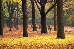 紅葉している公園の写真素材 [FYI02929186]