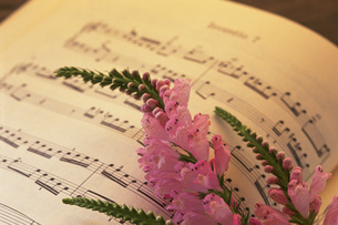 楽譜と花の写真素材 [FYI02929423]