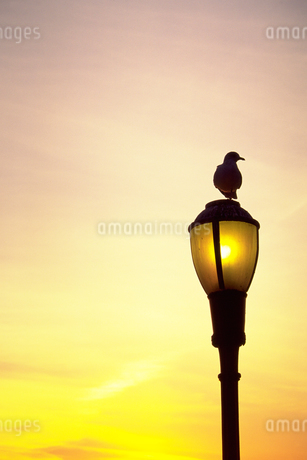 夕陽を眺める鳥の写真素材 [FYI02929526]