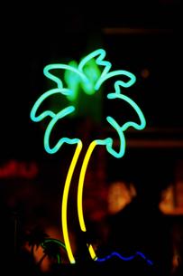 ヤシの木の写真素材 [FYI02929613]