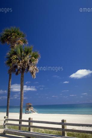 椰子の木と白浜の写真素材 [FYI02929625]