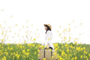 トランクを持って菜の花畑を歩く女性の写真素材 [FYI02930250]