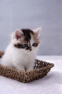 子猫の写真素材 [FYI02930728]