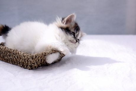 子猫の写真素材 [FYI02930760]