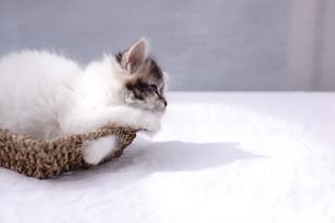 子猫の写真素材 [FYI02930785]