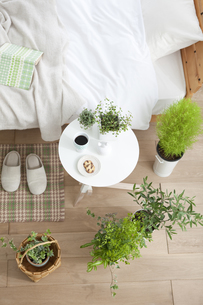 植物がある寝室イメージの写真素材 [FYI02931783]