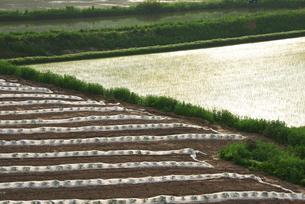 朝の水田と畑の写真素材 [FYI02933072]