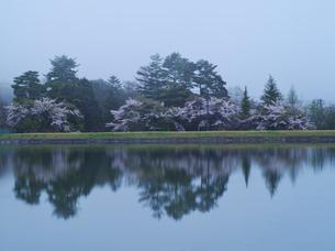 霧の駒ヶ池と桜の写真素材 [FYI02933077]
