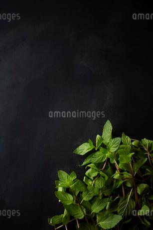 ミントの葉の写真素材 [FYI02933338]