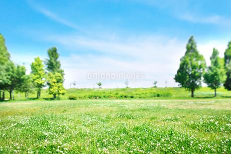 シロツメクサが咲いた緑の広場の写真素材 [FYI02933733]