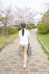 サクラ並木道で車椅子を押す後姿の介護福祉士の写真素材 [FYI02933776]