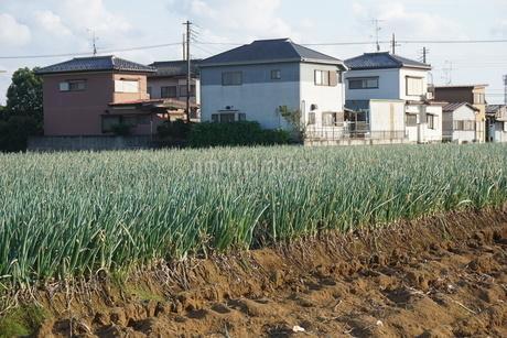 畑の写真素材 [FYI02933785]