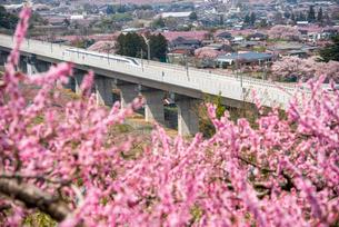 桃の花とリニアモーターカーの写真素材 [FYI02933835]