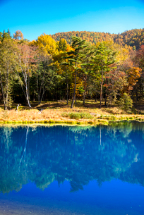 青い池と黄葉の写真素材 [FYI02933881]