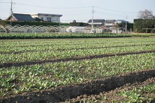 畑の写真素材 [FYI02933951]