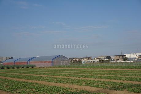 畑の写真素材 [FYI02933981]