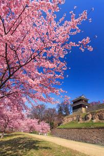 上田城の西櫓と桜の写真素材 [FYI02934278]