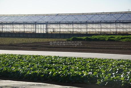 畑の写真素材 [FYI02934408]
