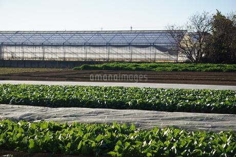 畑の写真素材 [FYI02934431]