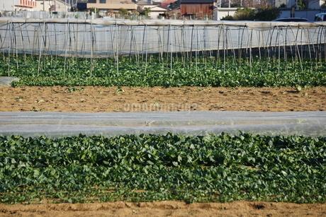 畑の写真素材 [FYI02934454]