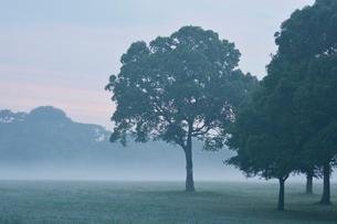 朝もやの水元公園中央広場の写真素材 [FYI02934872]