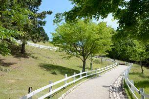 神戸市立六甲山牧場・新緑のイメ-ジの写真素材 [FYI02934952]