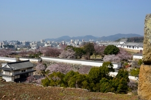 桜咲く姫路城 備前門から西の丸庭園街並みを見るの写真素材 [FYI02934974]