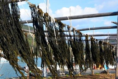 和歌山,衣奈漁港,ワカメの天日干しの写真素材 [FYI02935010]