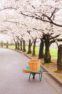 公園のサクラ並木と掃除道具の写真素材 [FYI02935065]