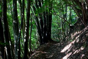 東京大学演習林の樹林帯の写真素材 [FYI02935088]