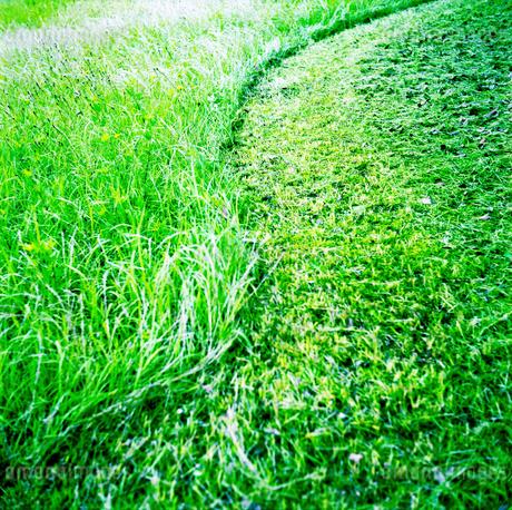 草刈りの跡の写真素材 [FYI02935109]