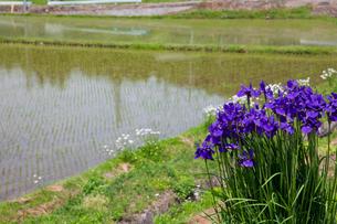 花のある田園の写真素材 [FYI02935197]