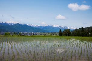 田園風景と北アルプスの写真素材 [FYI02935200]