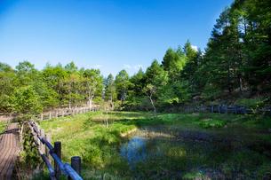 八ヶ岳高原 美しの森の羽衣池の写真素材 [FYI02935204]