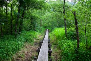 池河内湿原の木道の写真素材 [FYI02935229]