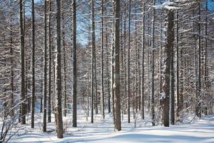 雪の並木道 霧ヶ峰ビーナスライン付近の写真素材 [FYI02935259]