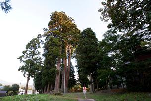 杉の巨木の写真素材 [FYI02935304]