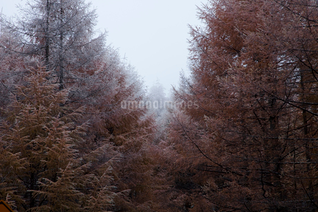 霧氷の木々の写真素材 [FYI02935305]