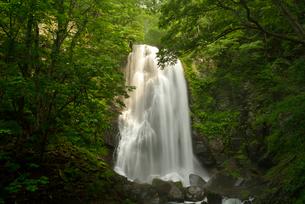 木々に囲まれた滝の写真素材 [FYI02935340]