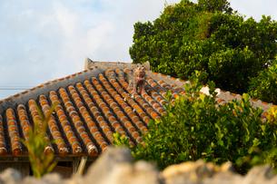 シーサーのある竹富島の民家の写真素材 [FYI02935735]