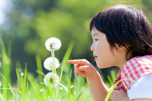 公園でタンポポを指差す女の子の写真素材 [FYI02935837]