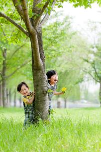 公園の木の下で遊ぶ姉と弟の写真素材 [FYI02935855]