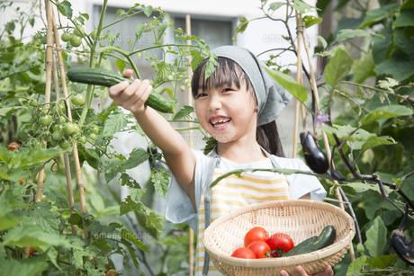 収穫した野菜を持っている女の子の写真素材 [FYI02935877]