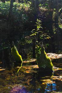 神の子池の秋の写真素材 [FYI02935996]