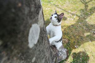 木に登る子猫の写真素材 [FYI02936007]