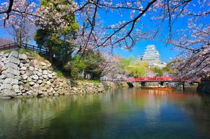 姫路城 天守閣と桜に赤い城見橋と観光学習船の写真素材 [FYI02936022]