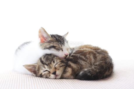 仲良く眠る子猫の兄弟の写真素材 [FYI02936027]