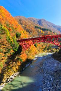 秋の黒部峡谷鉄道・快晴の空にトロッコ電車と紅葉の写真素材 [FYI02936049]
