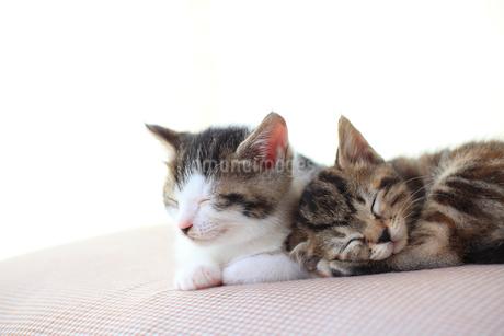 眠る子猫の写真素材 [FYI02936239]